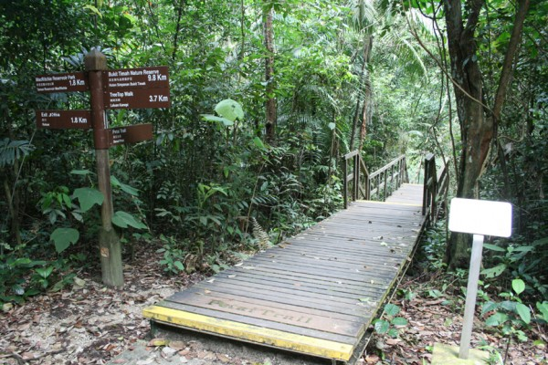 MacRitchie Nature Trail – Nature lovers dream